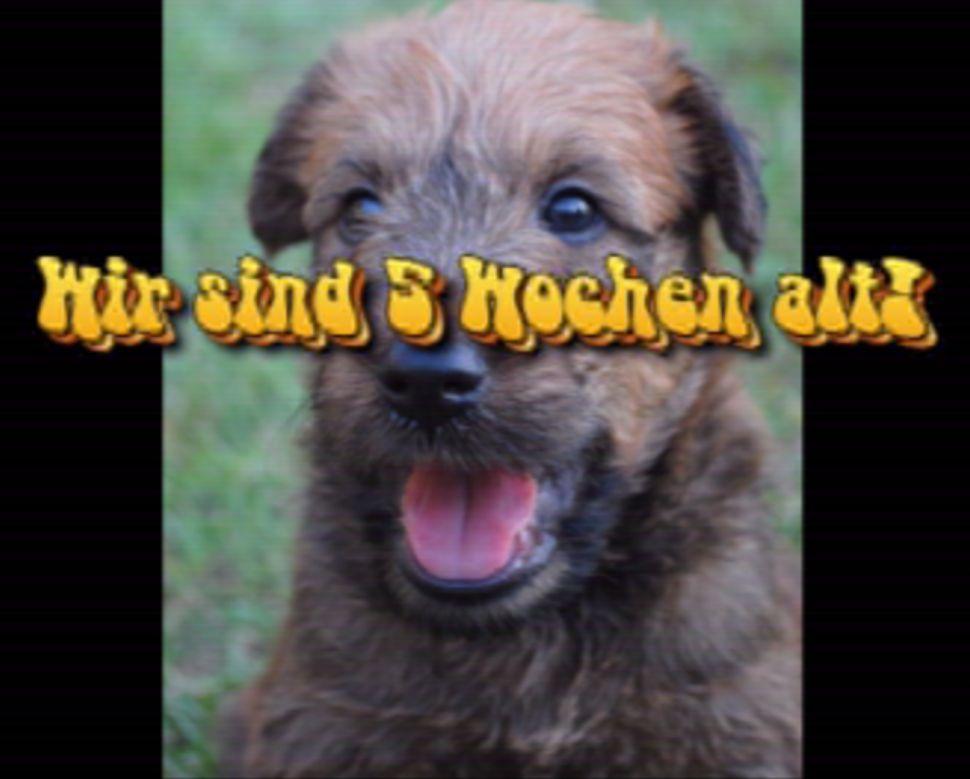 5_wochen_2011